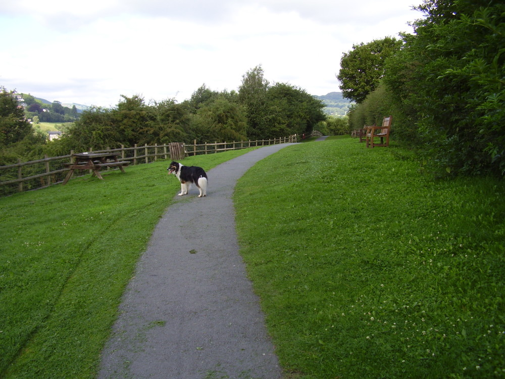 Country park dog walk near Wrexham, Wales - Dog walks in Wales