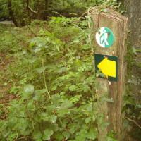 Pwll Crwn Wood dog walk near Aberystwyth, Wales - Dog walks in Wales