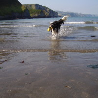 Sandy dog-friendly beach near Fishguard, Wales - Dog walks in Wales