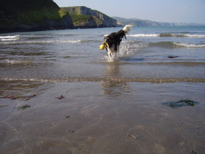 Sandy dog-friendly beach near Fishguard, Wales - Driving with Dogs