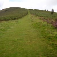 Dog walk near Llanwrtyd Wells, Wales - Dog walks in Wales