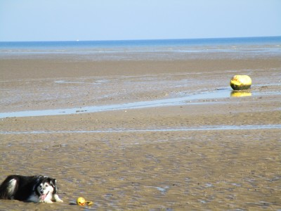 Greatstone on Sea dog-friendly beach, Kent - Driving with Dogs