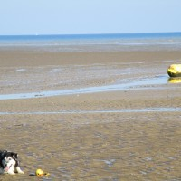 Greatstone on Sea dog-friendly beach, Kent - Kent dog-friendly beach