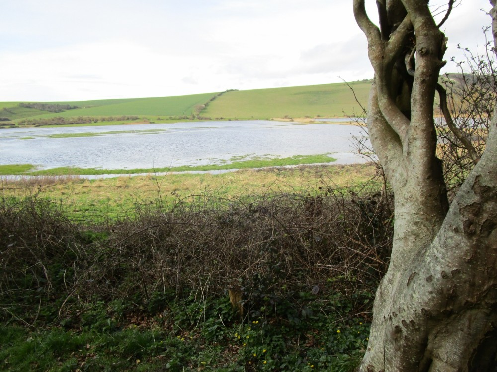 White Horse view dog walks, East Sussex - Sussex dog walks and dog-friendly pubs.JPG