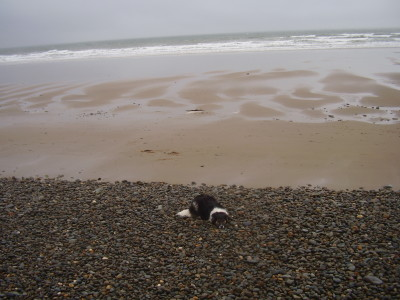 Tal-y-Bont dog-friendly beach near Barmouth, Wales - Driving with Dogs