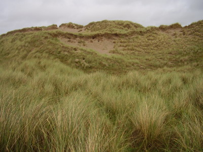 Large dog-friendly beach and walk near Harlech, Wales - Driving with Dogs