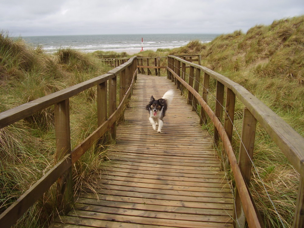 Large dog-friendly beach and walk near Harlech, Wales - Dog walks in Wales