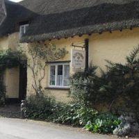 Kitnors dog-friendly Tea Garden near Minehead, Somerset - kitnors tea garden.jpg