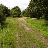 Cannock dog walk and dog-friendly pub, Staffordshire - Dog walks in Staffordshire