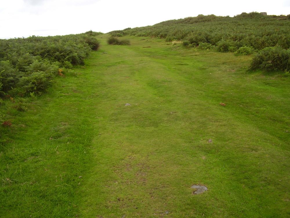 Dog walk near Mold, Wales - Dog walks in Wales