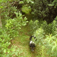 A55 dog walk near Colwyn Bay, Wales - Dog walks in Wales