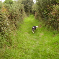 Coastal dog walk with dog-friendly pub stop, Wales - Mid-Wales dog walk, beach, and dog-friendly pub