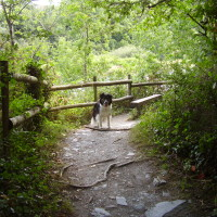 Teifi dog walk near Cardigan, Wales - Dog walks in Wales