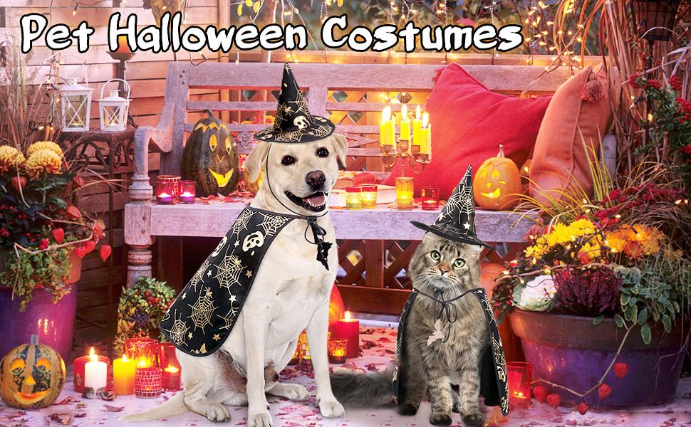 Halloween tricks and treats for doggo