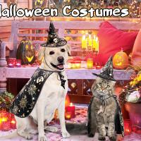 dog hogwarts cape and hat.jpg
