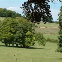 A walk on the chalk downs, Berkshire - Berkshire dog walk