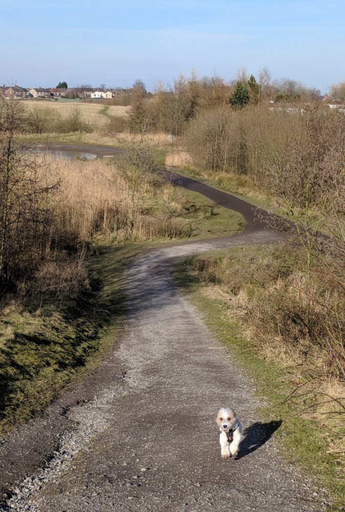 M62 J.7 Dog Walk at Sutton Manor Woodlands (The Dream Sculpture), Merseyside - IMG_20180224_144028.jpg