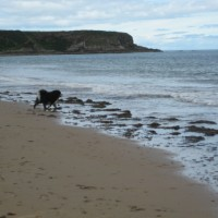 A98 dog-friendly beach at Cullen, Scotland - Dog walks in Scotland