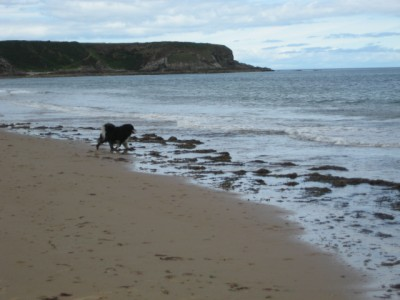 A98 dog-friendly beach at Cullen, Scotland - Driving with Dogs