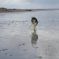 Dog-friendly beach near Eastbourne, East Sussex - Dog-friendly beach Sussex.JPG