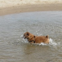 Holkham dog walk and dog-friendly beach, Norfolk - Dog walks in Norfolk