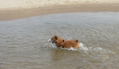 Holkham dog walk and dog-friendly beach, Norfolk - Driving with Dogs