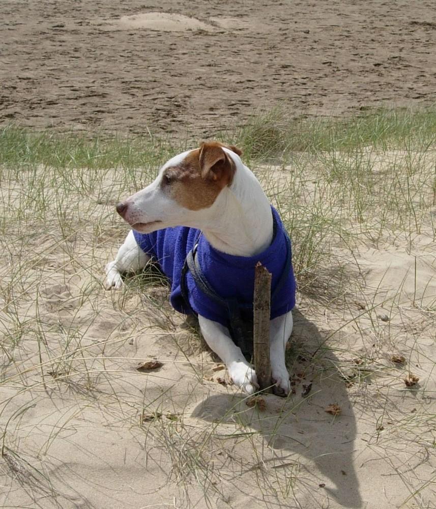 Holkham dog walk and dog-friendly beach, Norfolk - Dog walks in Norfolk