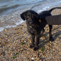 Bradwell dog-friendly beach, Essex - Dog walks in Essex