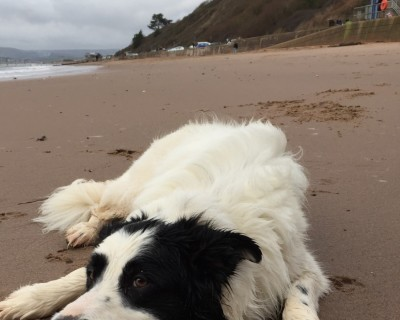 Dog friendly beach (the whole beach in winter, parts in the summer), Devon - Driving with Dogs