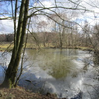 Big Common dog walks, Staffordshire - HighgateCommon-dogwalks