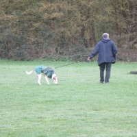 M25 Junction 8 Country Park dog walks and a dog-friendly pub, Surrey - Surrey dog walks and dog-friendly pubs.JPG