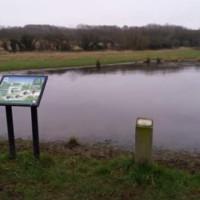 Thurcaston dog walks, Leicestershire - 0CA2C5A4-A1CD-4068-91B3-9E64483048E9.jpeg
