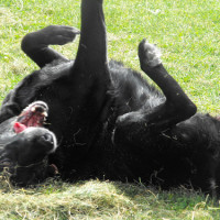 The Wick local dog walk, St Albans, Hertfordshire - Dog walks in Hertfordshire