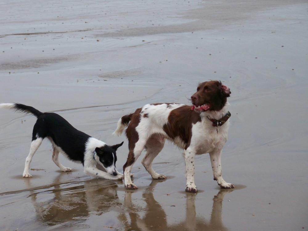 Normans Bay dog-friendly beach, East Sussex - Sussex dog-friendly beach