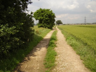 M4 Junction 5 dog walk and dog-friendly pub, Berkshire - Driving with Dogs
