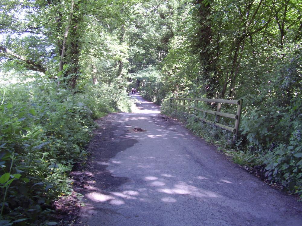 Reservoir dog walk near Chesterfield, Derbyshire - Image 1