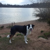 A34 lakeside dog walk near Congleton, Cheshire