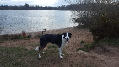 A34 lakeside dog walk near Congleton, Cheshire - Driving with Dogs