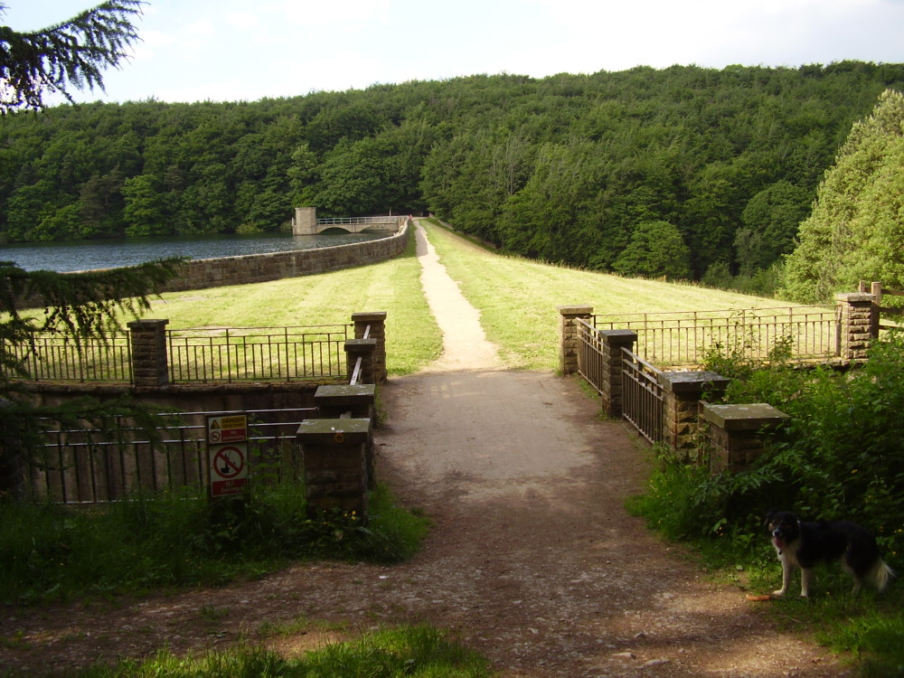 Reservoir dog walk near Chesterfield, Derbyshire - Dog walks in Derbyshire