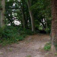 A404 local walk Chorleywood, Hertfordshire - Chorleywood dog walk1.jpg