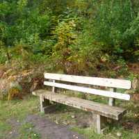 Sherwood Pines Forest Park dog walk, Nottinghamshire - Dog walks in Nottinghamshire