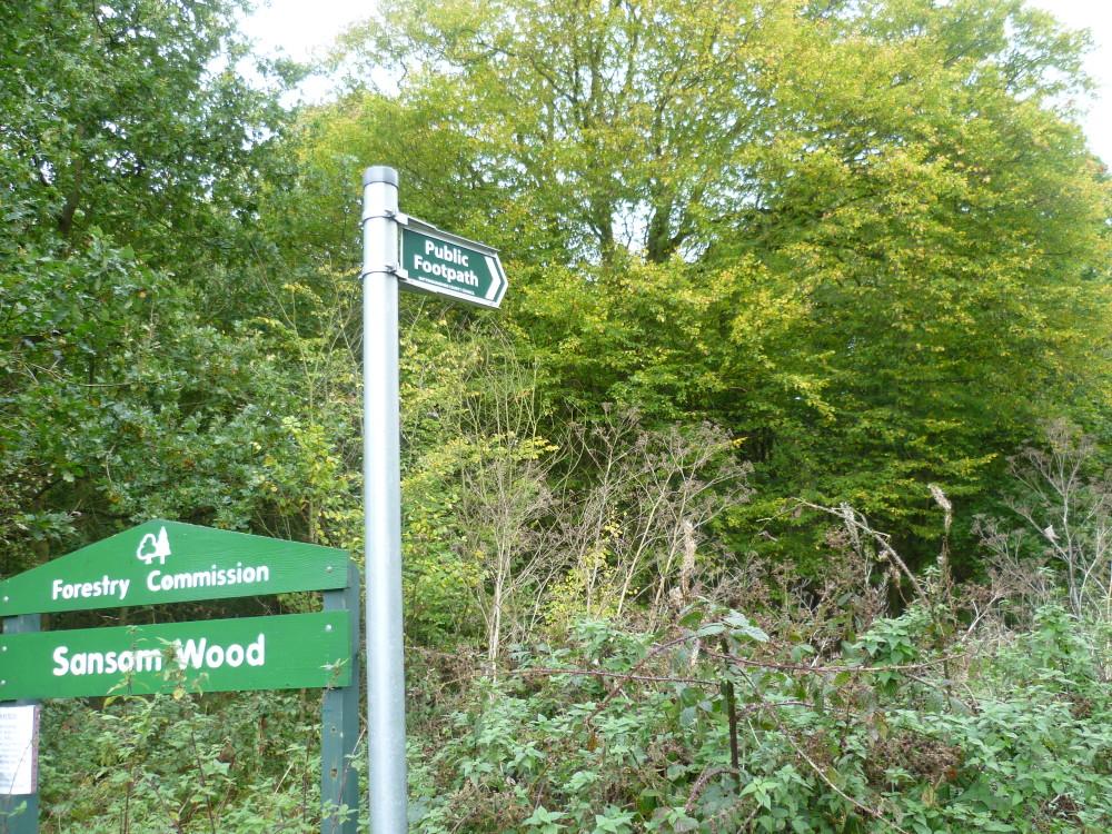 Sansom Wood dog walk, Nottinghamshire - Image 1