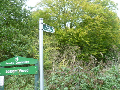 Woodland dog walk near Ravenshead, Nottinghamshire - Driving with Dogs