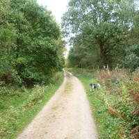 Sansom Wood dog walk, Nottinghamshire - Dog walks in Nottinghamshire