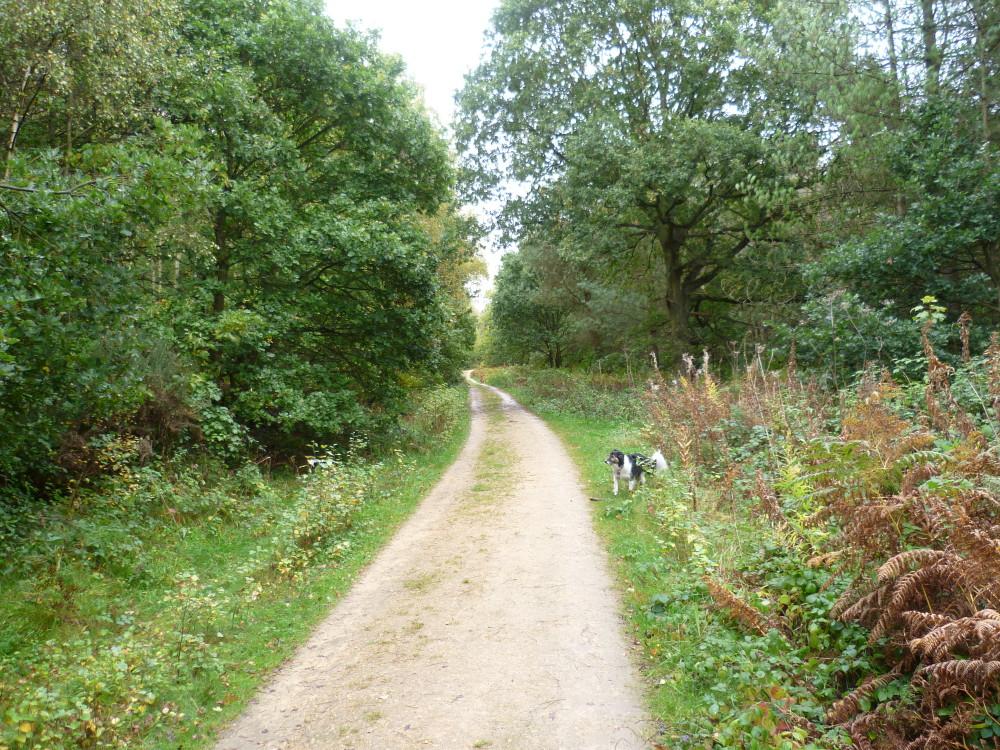 Woodland dog walk near Ravenshead, Nottinghamshire - Dog walks in Nottinghamshire