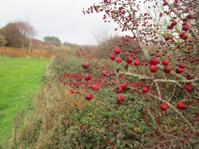 A35 coast path dog walk with views, Dorset - Driving with Dogs