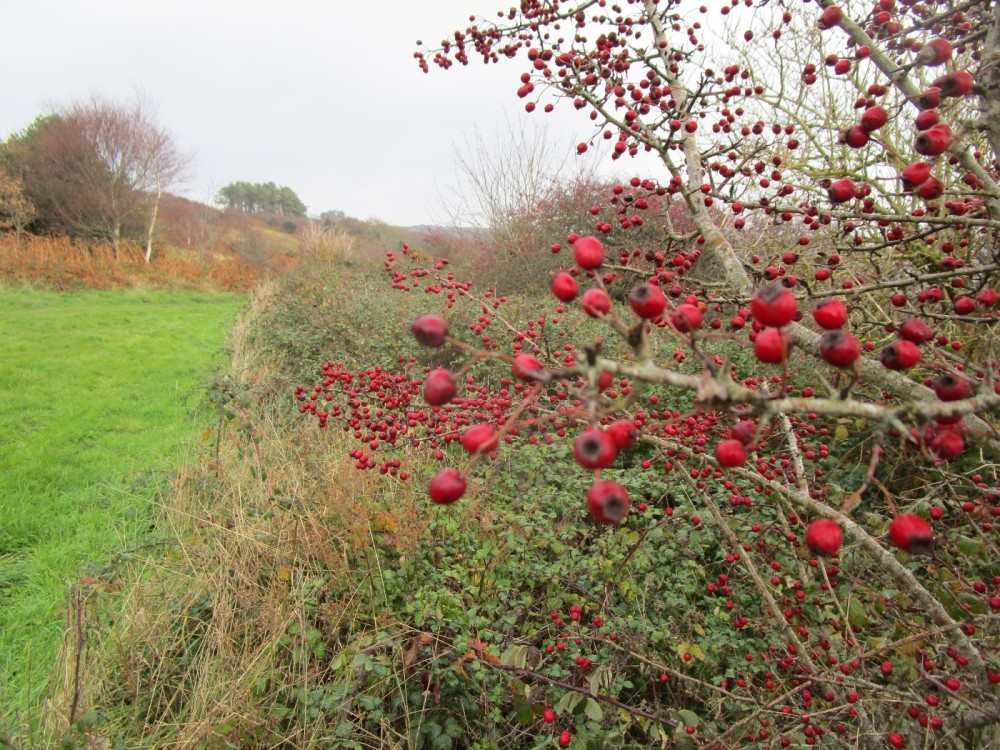 A35 coast path dog walk with views, Dorset - IMG_6734.JPG