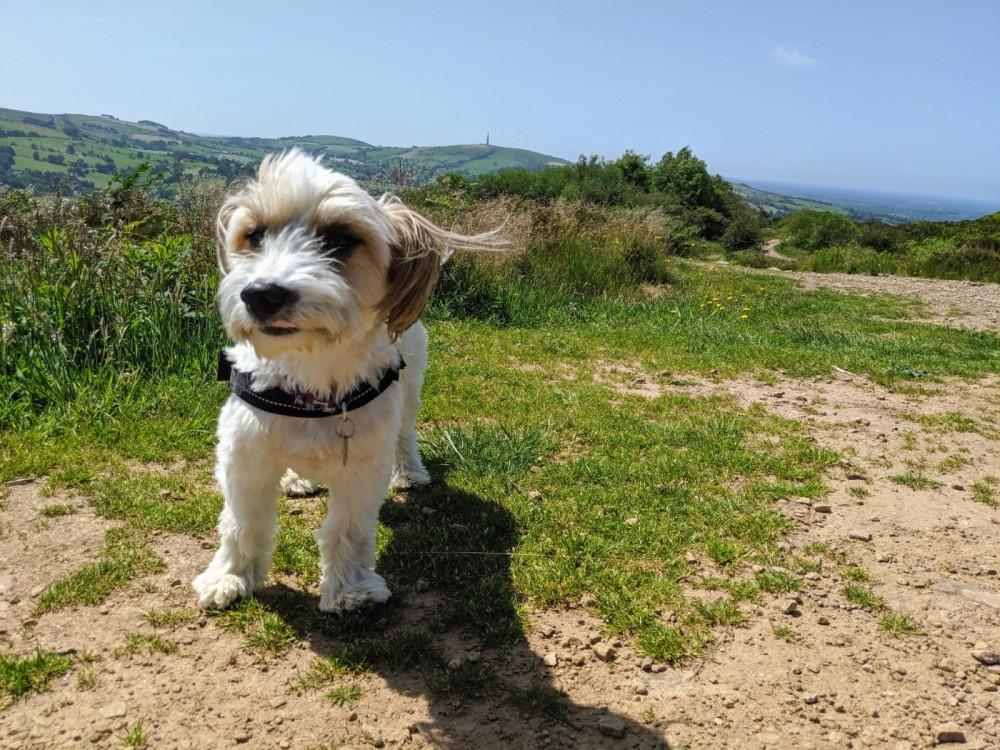 Tegg's Nose dog walks near Macclesfield, Cheshire - IMG_20190628_113738.jpg