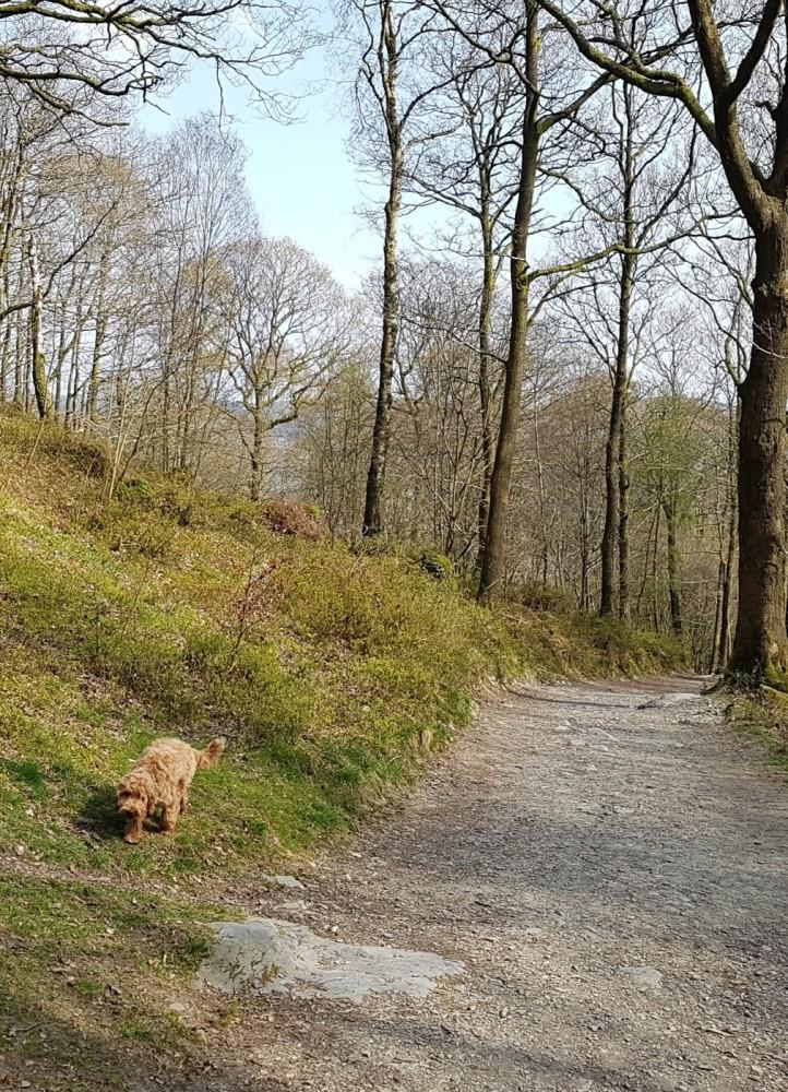 High Dam dog walk, Cumbria - 20190415_151929.jpg