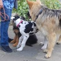 A505 dog-friendly village pub and a dog walk, Hertfordshire - Hertfordshire dog friendly pub and dog walk.jpg